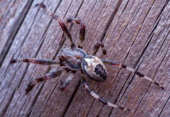 Extermination d'araignée - Services Extermination 2000